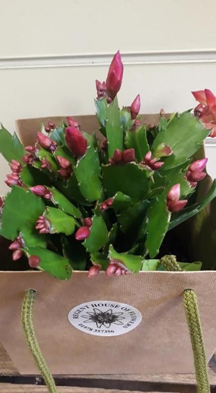 Christmas Cacti.Dark Pink Christmas Cacti Bag