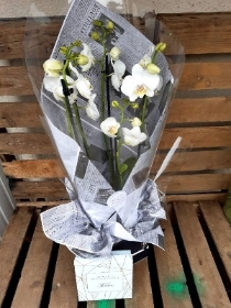 4 stemmed white phaelenopsis orchid in box with truffles