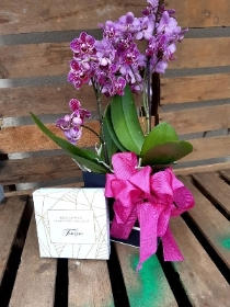 double pink mini phaelenopsis orchid box with truffles