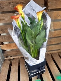 Orange Calla lily box