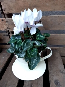 White cyclamen tea cup