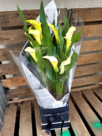 yellow calla lily box